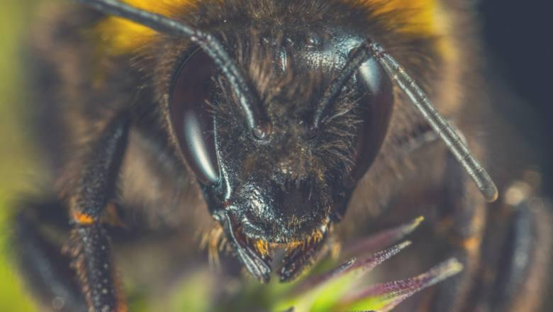 To przez nie uciekasz z krzykiem - TOP 10 owadów, które zmieniają lato w horror
