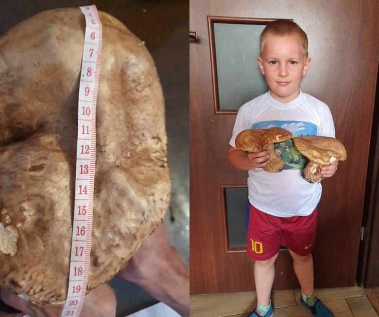 Kujawsko-pomorskie lasy są już pełne grzybów. Takie gigantyczne prawdziwki udało się zebrać naszej Czytelniczce w lasach pod Toruniem. A jak tam Wasze