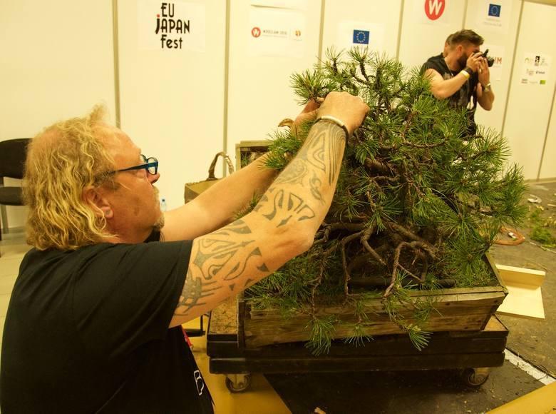 Wystawa drzewek bonsai we Wrocławiu