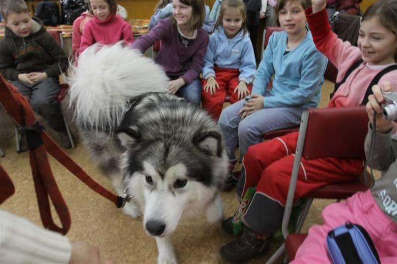 zajęcia z psami w Supraślu