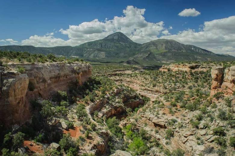 Fragment Piaszczystego Kanionu (Sand Canyon) z pozostałościami wielu stanowisk prekolumbijskiej kultury Pueblo ukrytych w niszach i schroniskach skalnych na stromych stokach kanionu