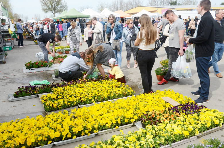 W niedzielę 15 kwietnia, byliśmy na zielonogórskiej giełdzie  rolno-towarowej. Handel działa tam co niedzielę, w godz. 7.00 do godz. ok. 13.00 - 14.00.