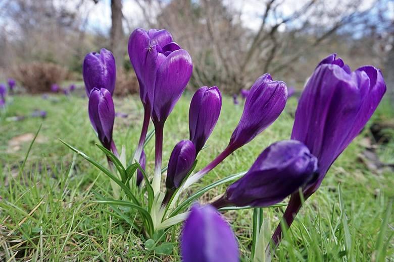 Łodzianie korzystają z pięknej pogody. Ogród botaniczny pełen spacerowiczów ZDJĘCIA