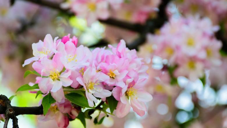 Kwiecień w ogrodzie, na balkonie i na działce. Czy można teraz legalnie jechać na działkę?