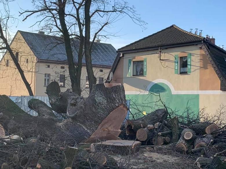 Dąb Karlik w Gogolinie został wycięty.