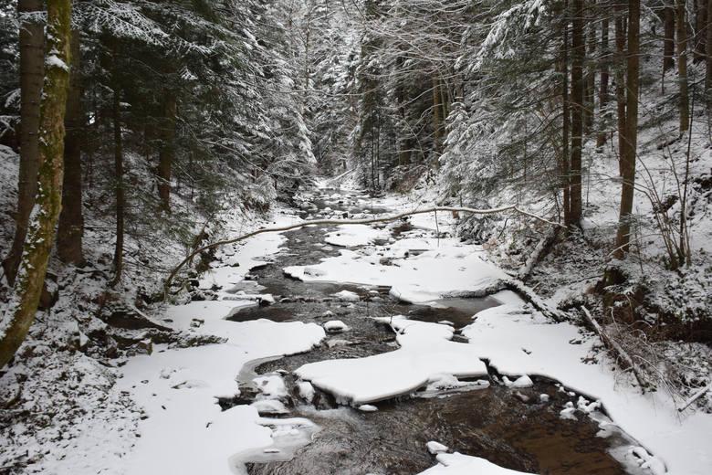 Tak wyglądają o tej porze roku lasy w okolicy Baligrodu w Bieszczadach. Te zdjęcia nasz fotoreporter zrobił w urokliwych miejscach na terenie Nadleśnictwa