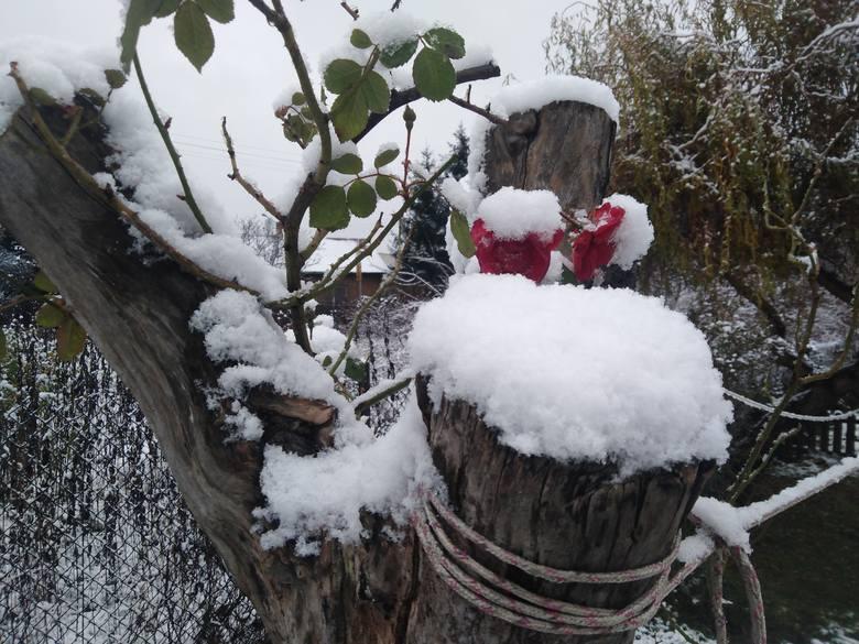 Śnieg zaczął padać już w sobotę wieczorem. Termometry wskazywały około zera i biały puch został z nami do rana. Meteorolodzy prognozują w Radomiu temperaturę