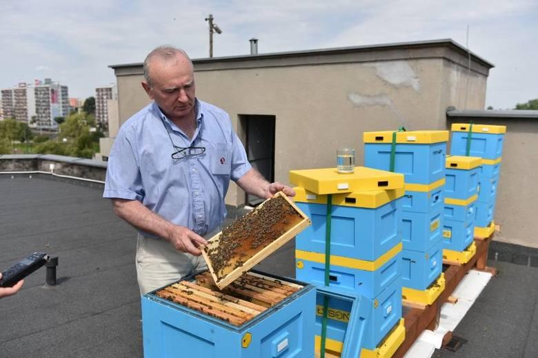 Na dachu urzędu marszałkowskiego w Toruniu pszczoły mieszkają w nowoczesnych, poliuretanowych ulach.