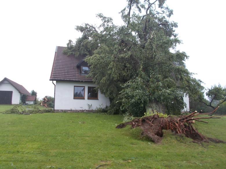 Jakby tego nieszczęścia było mało, to jeszcze na dom Synaków zwaliło się ogromne drzewo i uszkodziło dach
