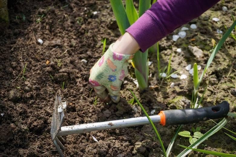 Szukam pomocnika ogrodnika, sprawnego fizycznie, dyspozycyjnego oraz zaangażowanego w pracę. ZAKRES PRAC:wszystkie prace polegające na pielęgnacji i