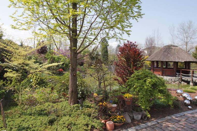 Ogrody Kapias zachwycają o tej porze roku. Zobacz kolejne zdjęcia. Przesuwaj zdjęcia w prawo - naciśnij strzałkę lub przycisk NASTĘPNE