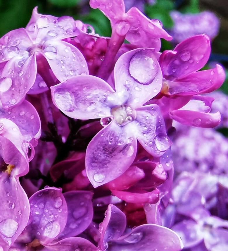 Kwiaty na zdjęciach naszych Czytelników są tak piękne, że można niemal poczuć ich zapach. Zobaczcie