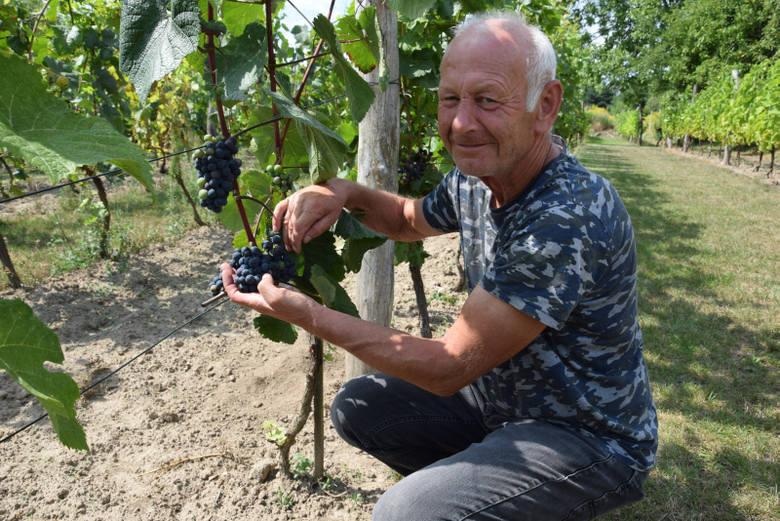[b]Uprawa winorośli na ziemi lubuskiej ma swoją długą tradycję. W ostatnich latach winnice powstają jak przysłowiowe grzyby po deszczu. Odwiedziliśmy jedną z nich - Winnicę Kalina w Sieniawie Lubuskiej. - Nadal inwestujemy w to wszystko i, jakby nie patrzeć, to zawsze będzie wyłącznie...