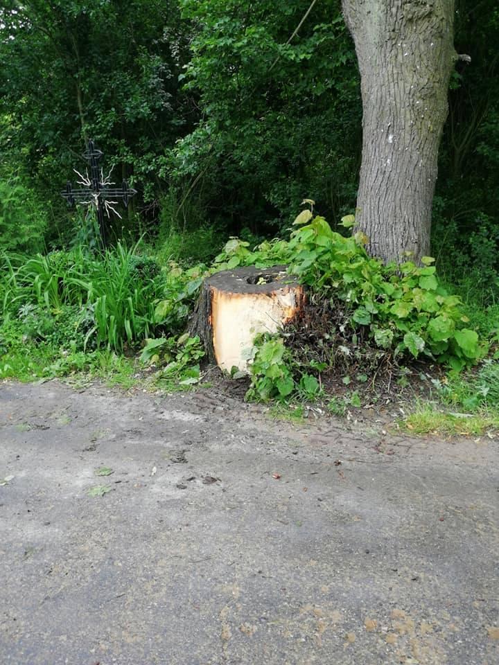 Ten wypadek mógł skończyć się tragicznie. Czy ten pień i to drzewo powinny tam tkwić?