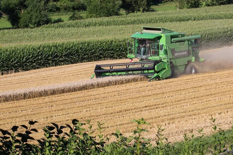 Zbiory zbóż na ogół były wyższe od tych sprzed roku, rzepaku w Polsce uzyskano nawet 21% więcej. Zdecydowanie słabsze okazały się na to zbiory owoców.