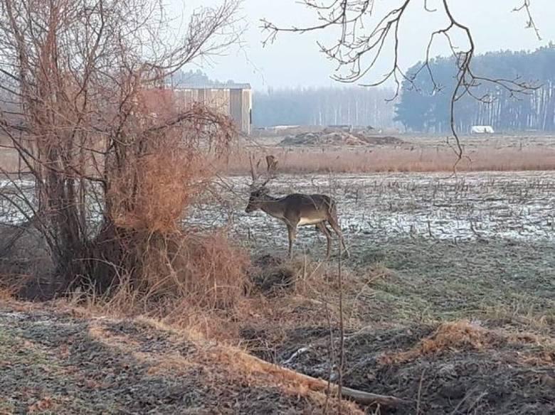 Nie takie widoki chcemy oglądać w trakcie spacerów po lesie.