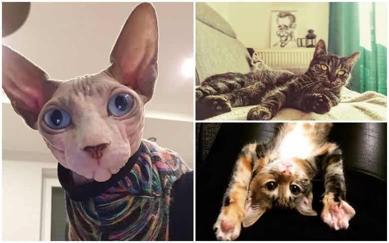Dzień Kota 2020. Zobacz ZDJĘCIA kotów naszych Internautów