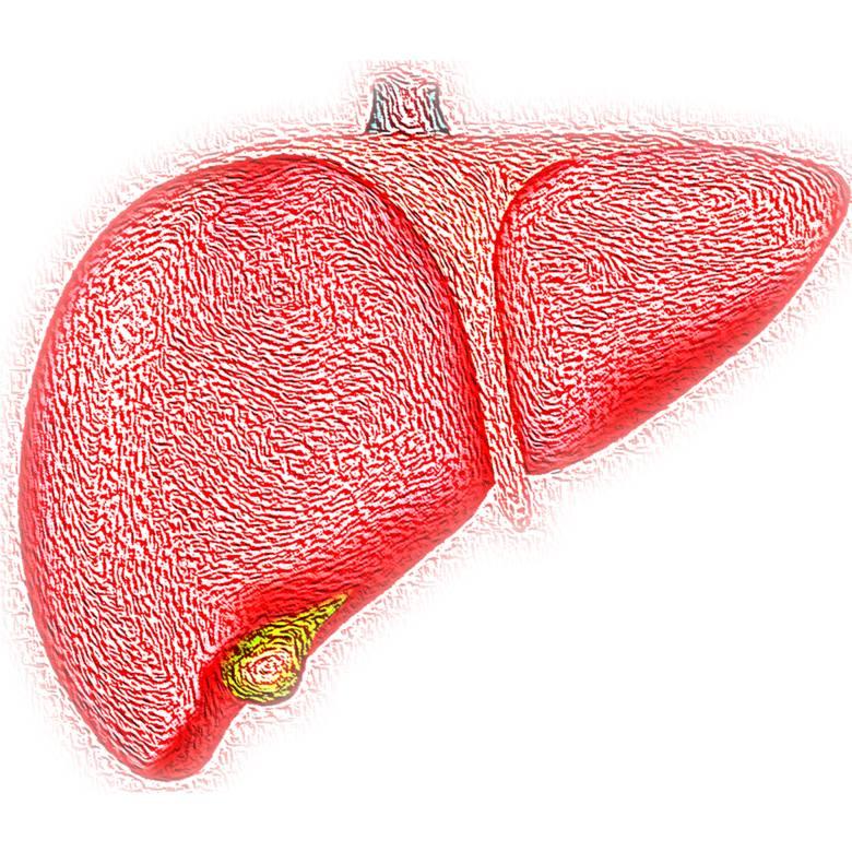 Wątroba to największy organ wewnętrzny i jedyny, który może się w pełni zregenerować. A przy tym superważny – nie tylko przetwarza wszystko, co trafia