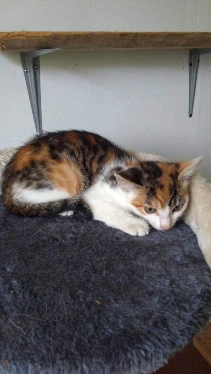 Wolontariusze TOZ-u opiekują się ponad 500 kotami. Bez pomocy innych nie dadzą rady ich wykarmić.