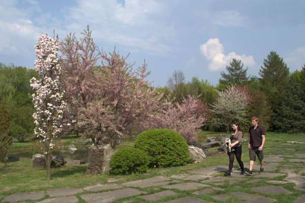 Spacer wśród kwitnących drzew będzie w ten weekend wyjątkowo przyjemny.