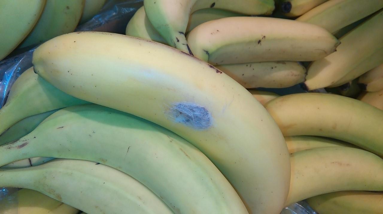 Groźny Pająk W Bananach W Lidlu Owoce Wysłano Do Ekspertyzy