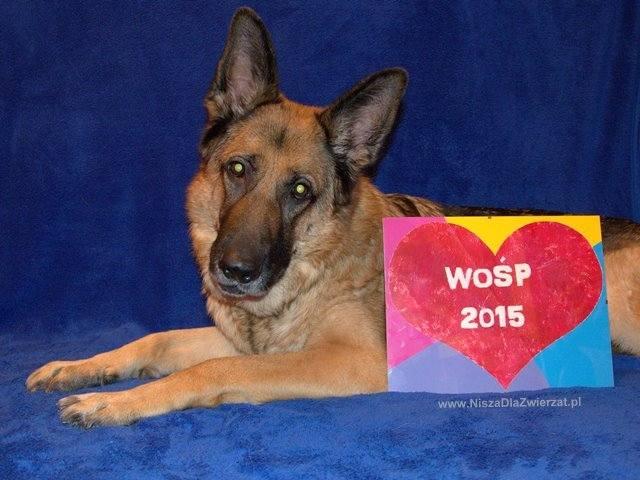 Obraz namalowany przez psa i wino Palikota - Najciekawsze aukcje WOŚP 2015 [ZOBACZ]