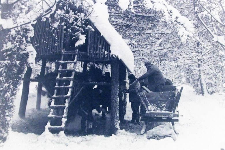 Paśnik w zimie stulecia niedaleko Słupska.