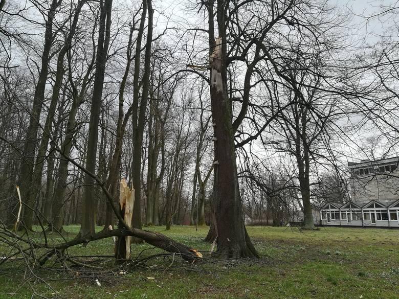 Przewrócone i połamane drzewa – to krajobraz znacznej części regionu po ostatniej wichurze. Internauta wysłał nam zdjęcia zniszczeń w parku obok Placu