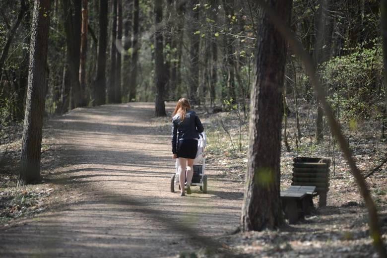 <strong>Trasa: 10  Wzgórza Piastowskie (w zależności od przyjętego wariantu). </strong><br /> <br /> Malowniczo położone tereny w południowo-zachodniej części Zielonej Góry. Pomiędzy ogrodem botanicznym (minizoo) oraz amfiteatrem znajdują się liczne utwardzone dukty leśne idealne do uprawiania turystyki...