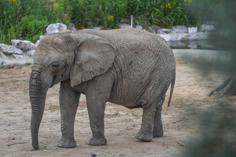 Najbardziej prawdopodobna data ponownego otwarcia zoo to połowa lub końcówka czerwca.