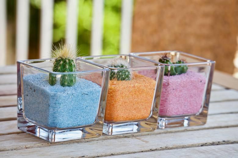 To pierwszy i chyba najbardziej popularny strzał  w dziesiątkę! Kaktusom i sukulentom nie trzeba poświęcać wielkiej uwagi. Te rośliny potrzebują małej