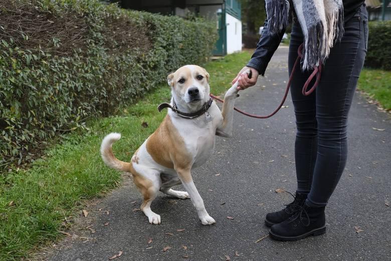 Sześć lat w toruńskim przytulisku spędził rekordzista – pies o wdzięcznym imieniu Bąbel. Dziś – choć nic nie wskazywało na happy end – psiak ma swoją