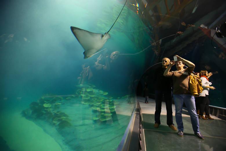 Oceanarium w Zabrzu. A może jednak w Rudzie Śląskiej?