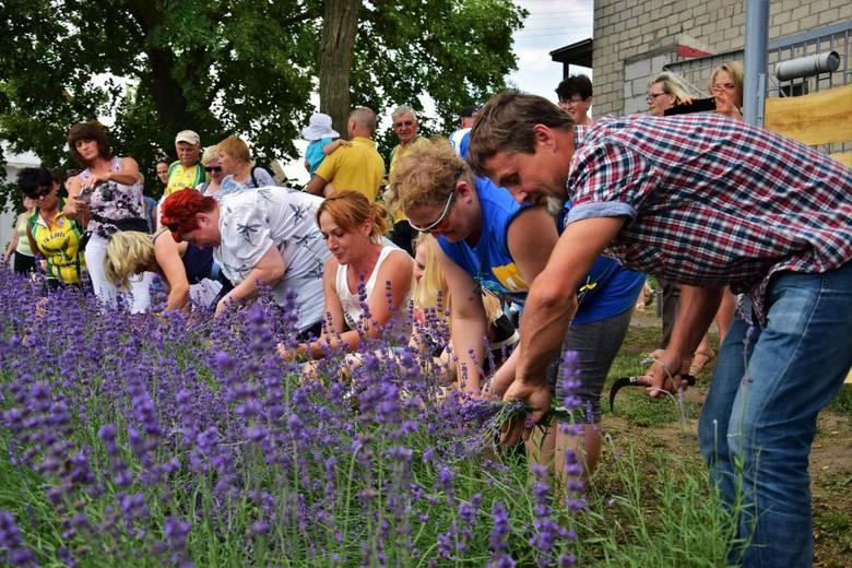 W Lovendzie Kujawskiej w Leszczu (gmina Złotniki Kujawskie) odbył się I Festiwal Lawendy na Kujawach. Impreza rozpoczęła się od rajdu rowerowego z Inowrocławia