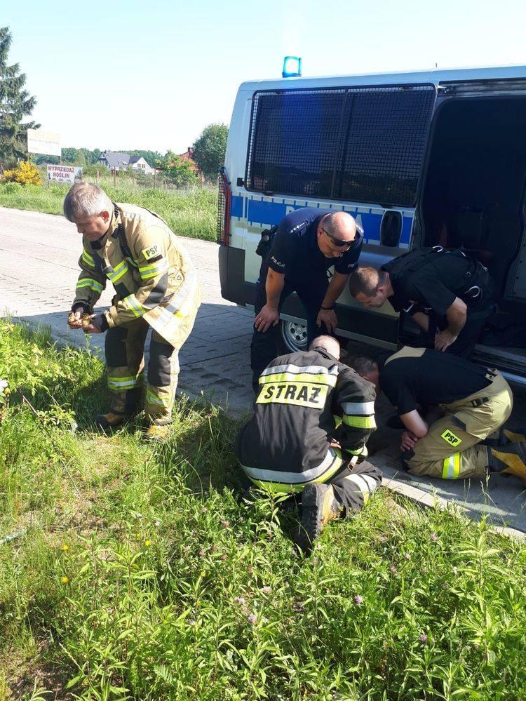 Szczęśliwie zakończyła się interwencja policjantów i strażaków wezwanych na pomoc do małych kaczek. Zwierzęta wpadły do studzienki na ul. Lawendowej.