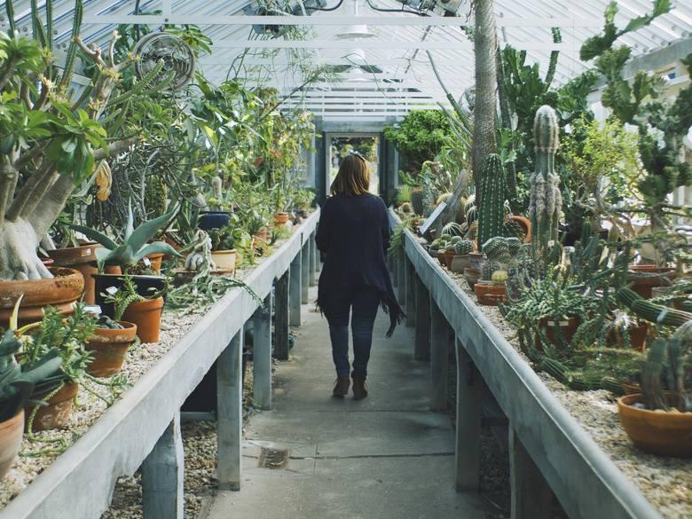 Nie każdy może być ogrodnikiem, ale każdy może hodować rośliny. Kwiaty w domu to nie tylko element wystroju wnętrz, ale też producent tlenu i naturalne