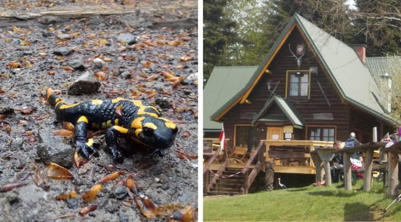 Kraków tak blisko gór! Majówka na Kudłaczach, spotkaliśmy salamandry ZDJĘCIA