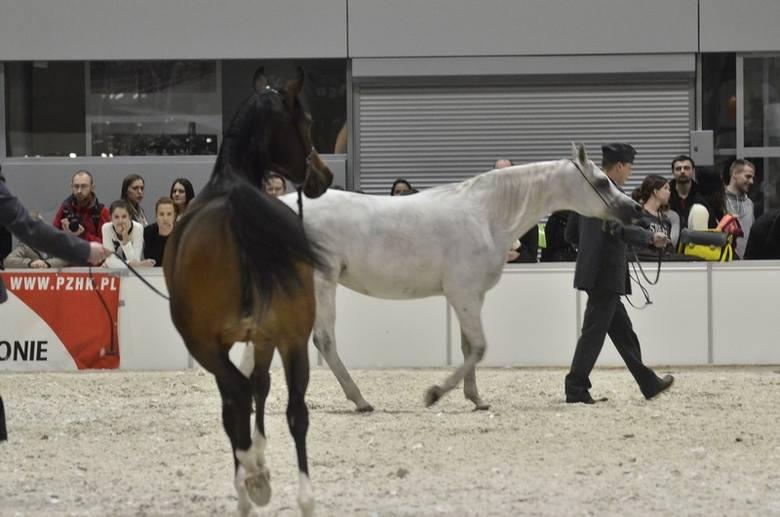 Na trwających na Międzynarodowych Targach Poznańskich zawodach jeździeckich Cavaliada odbył się pokaz koni arabskich czystej krwi.