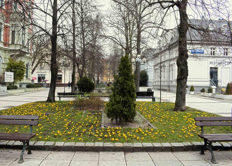 Od 21 marca mamy już upragnioną kalendarzową wiosnę. Wraz z którą pojawiły się pierwsze wiosenne kwiaty.