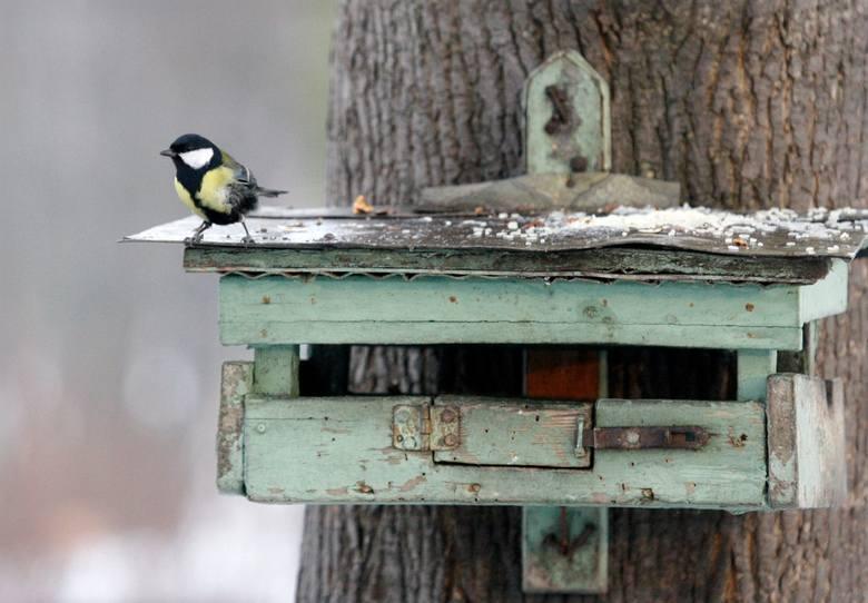 """Darmowe karmniki dla ptaków wydawane są wszystkim chętnym w Urzędzie Miasta w Aleksandrowie Łódzkim (pokój nr 5 na I piętrze). To fragment akcji """"Ptasi"""