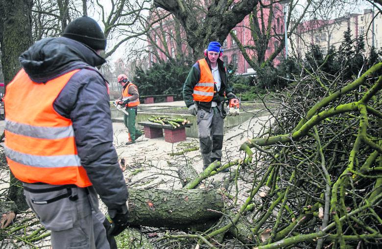 Zasady wycinania drzew i krzewów budzą wiele pytań.