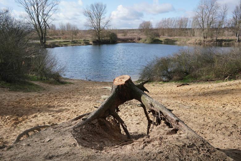 Zakład Lasów Poznańskich wyciął 7 drzew niebezpiecznych rosnących na brzegu skarpy Stawu Młyńskiego nad Różanym Potokiem. Zdaniem mieszkańców skarpa