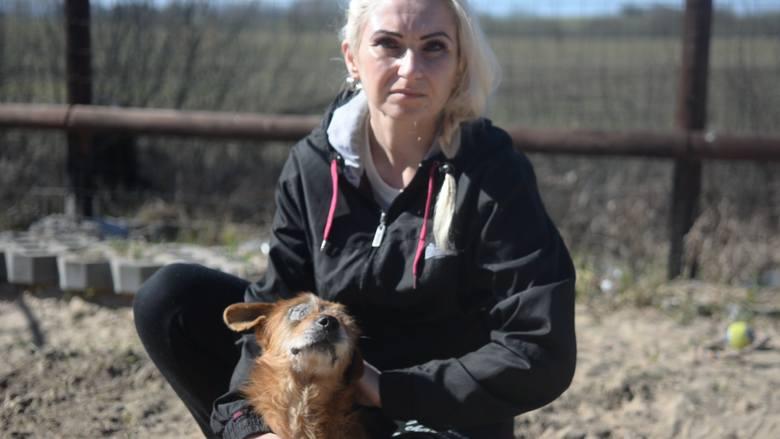 znęcanie nad zwierzętami