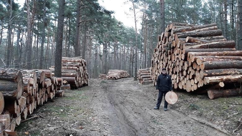 Zdzisław Białowąs przysłał nam zdjęcia i filmy wycinki drzew. Wyrżnięty pas drzew znajduje się między Ośrodkiem Kormoran a zatoką koło Ośrodka Ada. Napisał: