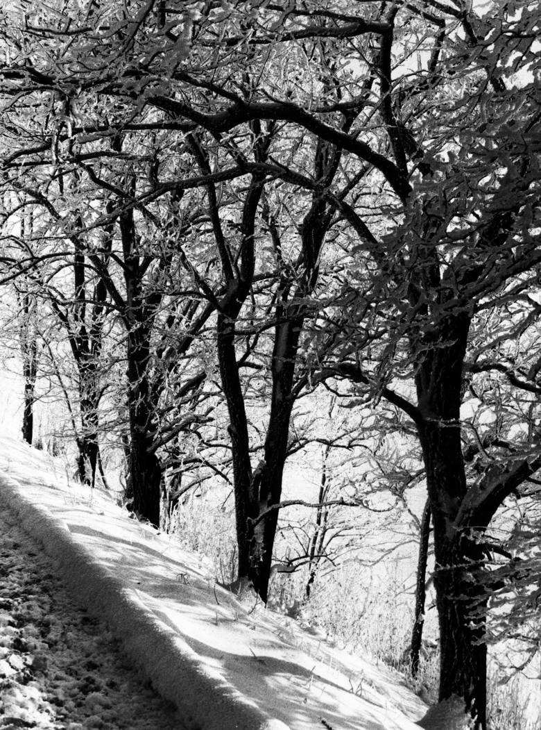 Tak kiedyś wyglądała zima na Pomorzu! Dużo śniegu, lodowisko przed Halą Olivia i... kolejki przedświąteczne. Archiwalne zdjęcia