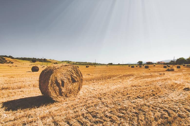 Dotacje po suszy 2019 - już można składać wnioski. Do kiedy potrwa nabór?