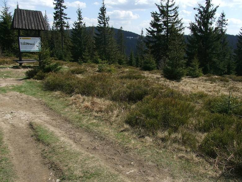 3. Szlak zielony: Koniki - Tobołów - Obidowiec - Stare Wierchy. Tutaj do pokonania mamy 8 kilometrów z różnicą wzniesień ok. 680 metrów. Pokonanie trasy