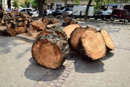 Kraków. Egzekucja drzew na placu Wolnica. Urzędnicy wyjaśniają: Musieliśmy to zrobić