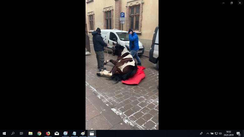 Kraków. Będzie dalsze śledztwo w sprawie konia Pilsnera