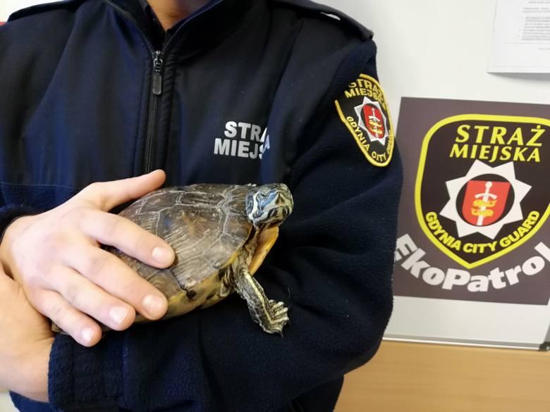 Żółw wyrzucony na śmietnik